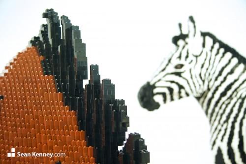 Zebra 1 (1)