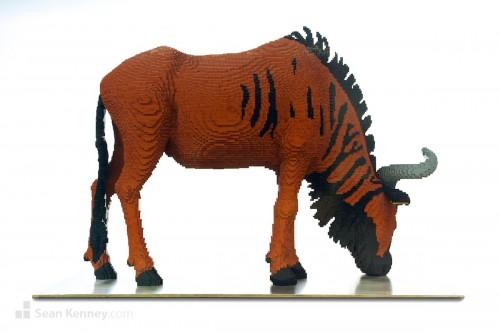 Zebra 13